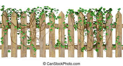 fence - wooden fence overgrown with ivy. isolated on white.
