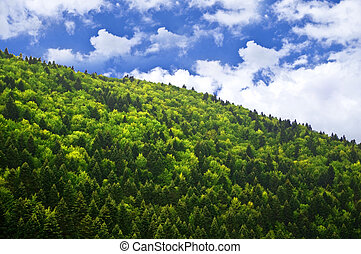 Green forest over blue sky