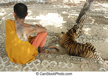 Monk and the Tiger - Buddhist monk and the Tiger in a Tiger...