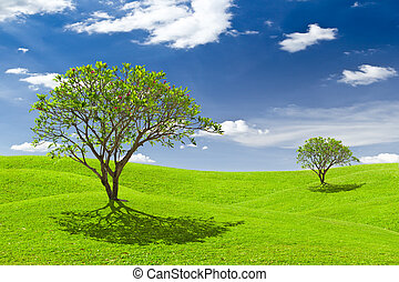 plumeria tree on green grass meadow