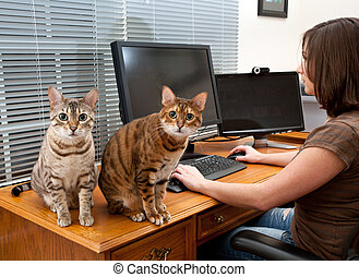 Woman and cats at computer desk - Young woman in home office...