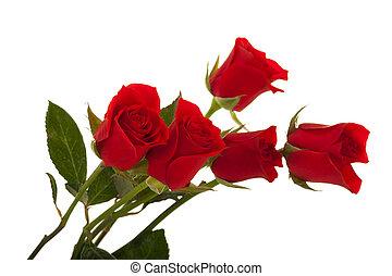 Roses - Red Roses on white