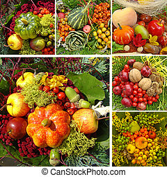 harvest collage - collage with autumnal vegetable...