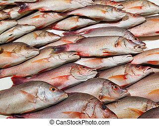 Red snapper - Fresh Snapper fish on a London market