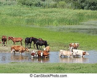 granja, río, animales