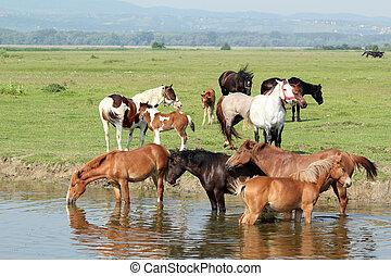 馬, 河, 牧群
