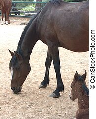 A horse with a foal, matrnity