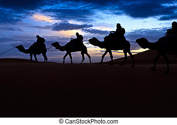 Camel Train Sahara Desert Morocco - Camel train silhouetted...