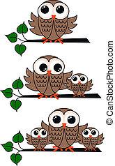 owls - three owl illustrations