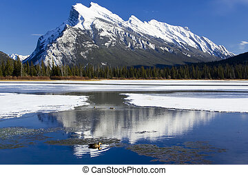 Mount Rundle Reflections - Mount Rundle reflected in the icy...