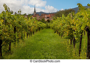 Alsace winery - Wine village and vineyards in the Alsace...