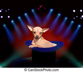 Doggy at circus - Cute doggy in magic hat on circus show,...