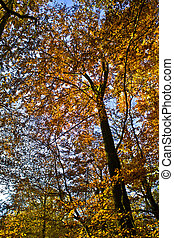 trees in autumn in the forest