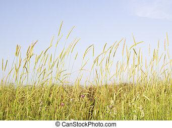 yellow plants field.
