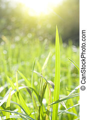 summer season nature background with grass and trees in the...