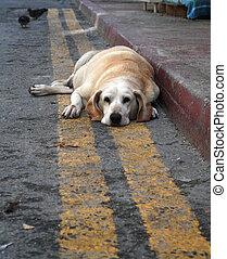Sweet and sad abandoned dog looking at camera