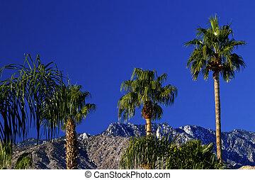 Fan Palms Trees Mountains Palm Springs California - Fan...