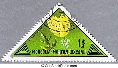 Pasqueflower - MONGOLIA - CIRCA 1973: A stamp printed in...