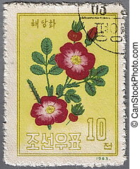 Flower campion - DPRK - CIRCA 1963: A stamp printed in DPRK...