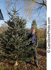 Bringing Home a Christmas Tree - Man bringing home a freshly...