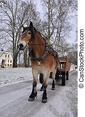 Horse in winter - Winter driving on horse