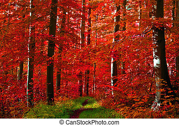 Red leaves forest - Path through an autumn forest with red...
