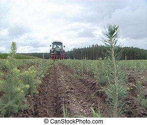 Christmas fir saplings and tractor - Field planted with...
