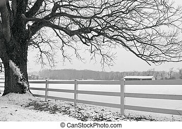 Winter Limb - A black and white snowy Winter in scene in...