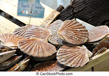 St Jacques scallops on the market