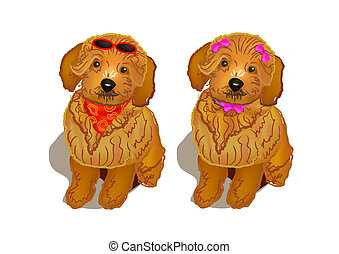 brown poodle - A pair of brown poodle dogs with modern...
