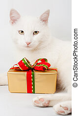 christmas cat gift background
