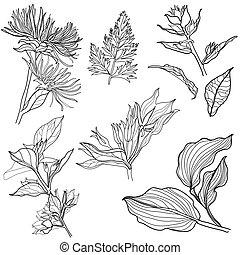 """Set of floral design elements (from my big """"Flower-set..."""