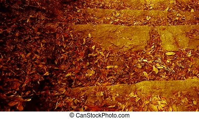 many yellow leaf on trails,quiet