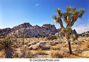 Joshua, árbol, paisaje, Yuca, Brevifolia, mojave,...