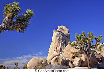 Rock Joshua Tree Big Rocks Yucca Brevifolia Mojave Desert Joshua Tree National Park California Named by the Mormon Settlers for Joshua in the Bible because the branches look like outstretched hands
