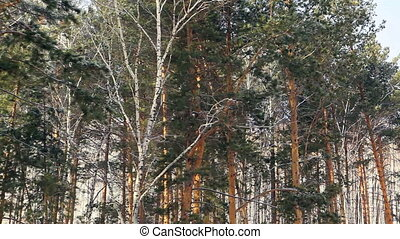 mixed forest