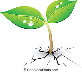 New life - Vector illustration of young sprout in crack