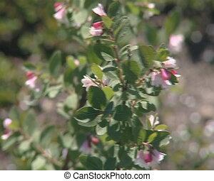 Small flowering fruit spring trees in botanical garden.
