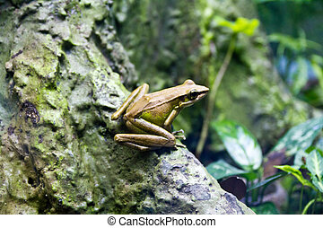 Frog on Tree Bark - a green frog resting on a tree bark