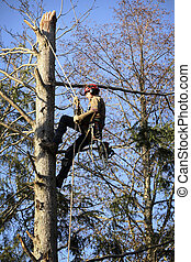 Arborist cutting tree - An arborist cutting a tree with a...