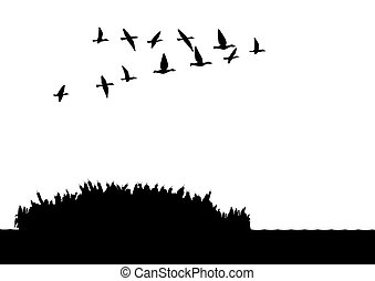 Ducks on the lake - Contour illustration. A flock of wild...