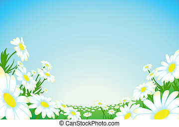 Summer camomile meadow - Summer meadow of blooming camomiles...