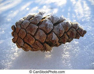Pine cone laying on the white snow