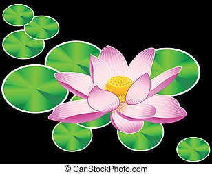 Waterlily or lotus flower - Blooming sacred lotus flower...