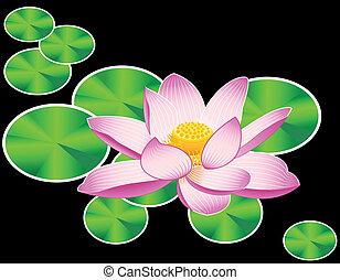 nénuphar, ou, lotus, fleur