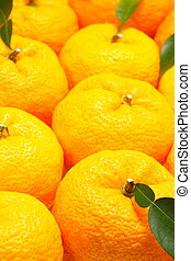 Citron texture and background close up shoot