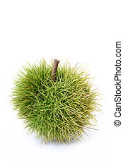 chestnut bur - green chestnut bur on white background