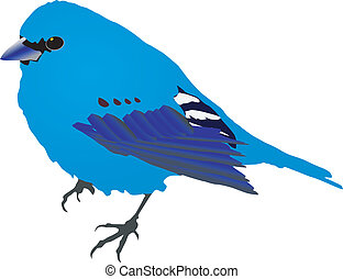 Beautiful blue bird. Vector