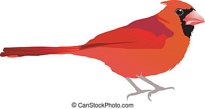 Beautiful red bird Vector EPS10