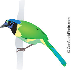Beautiful green bird. Vector EPS10